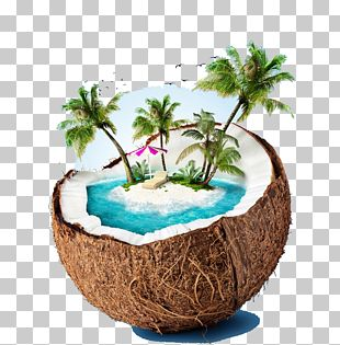 Siargao Coconut Water Beach Stock Photography PNG