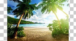 Beach Hut Desktop Palm Beach High-definition Television PNG