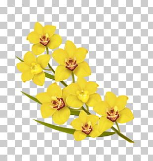 Flower Yellow Euclidean Illustration PNG