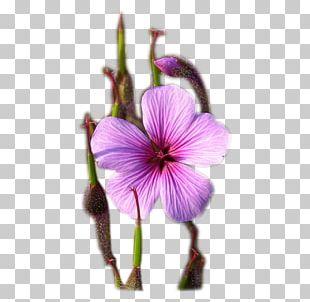 Purple Petal PNG