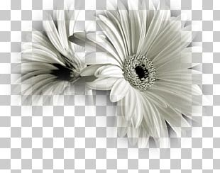 Black And White Flower Photography PNG