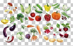 Fruit Vegetable Watercolor Painting PNG