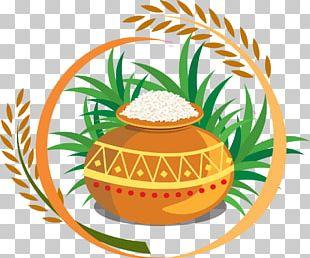 Thai Pongal Harvest Festival PNG