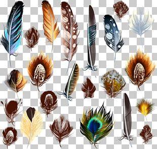 Bird Feather Euclidean PNG