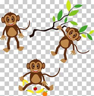 Monkey PNG