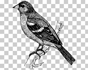 Bird Drawing Graphics PNG