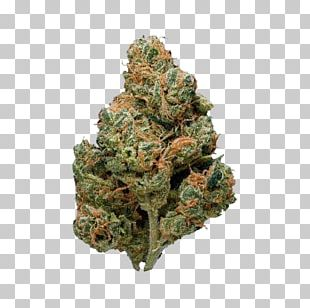 Sour Diesel Kush Cannabis Cup PNG