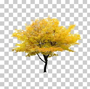 Red Maple Tree Maple Leaf PNG