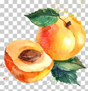 Eat Seasonably Eating Food Apricot PNG