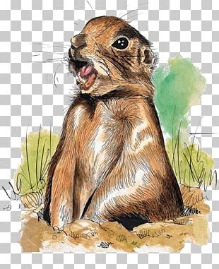 Squirrel Prairie Dog Marmot Hare Illustration PNG