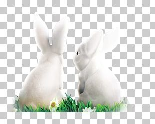 White Rabbit Domestic Rabbit Easter Bunny Hare PNG