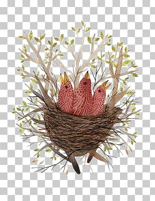 Bird Nest Paper Finch Illustration PNG