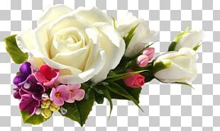 Garden Roses Portable Network Graphics Flower PNG