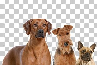 Dog Breed Rhodesian Ridgeback Dog Food Companion Dog Royal Canin PNG