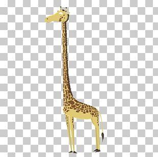 Northern Giraffe Sloth Drawing Illustration PNG