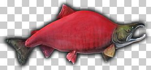 Fish Sockeye Salmon Taxidermy Beak Showcase PNG