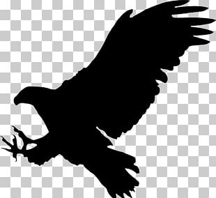 Bald Eagle Bird Silhouette PNG