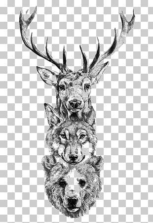 Deer Tattoo Bear Gray Wolf Drawing PNG