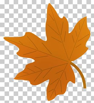 Drawing Autumn Leaf Color Maple Leaf PNG