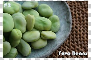 Broad Bean Food Balsamic Vinegar Syrian Cuisine Gluten-free Diet PNG