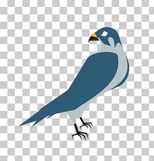 Hawk Free Content PNG