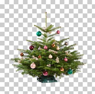 Christmas Tree Spruce Christmas Ornament Pine PNG