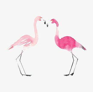 Flamingos PNG