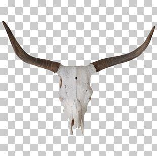 Texas Longhorn Bull Skull Bone PNG