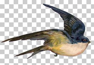 Bird Swallow Flight Sparrow Illustration PNG