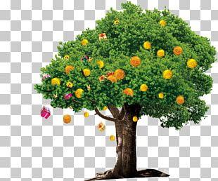 Tree Money Google S PNG
