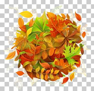 Autumn Leaves Leaf Maple PNG