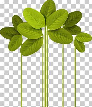 Leaf Euclidean Green PNG