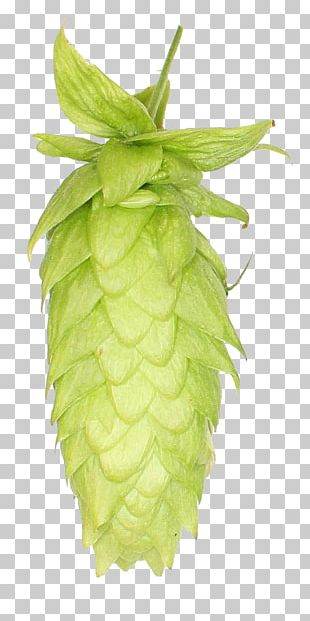 Beer India Pale Ale Common Hop Juice PNG
