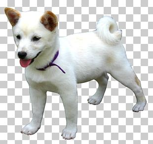 Canaan Dog Kishu Hokkaido Dog Shiba Inu Akita PNG