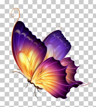 Butterfly Color Purple PNG