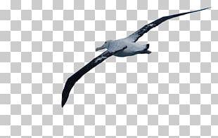 Wandering Albatross Wing Beak Feather PNG