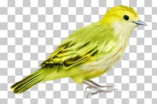 Bird Passerine Green PNG