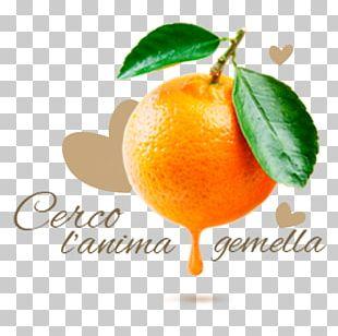 Orange Juice Mandarin Orange Clementine Fruit PNG