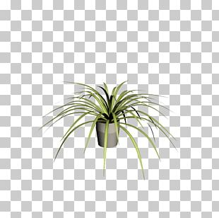 Leaf Plant Stem Flowerpot Arecales Tree PNG