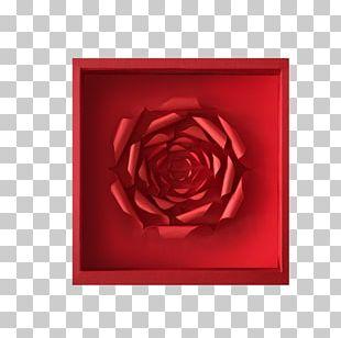 Garden Roses Beach Rose Icon PNG