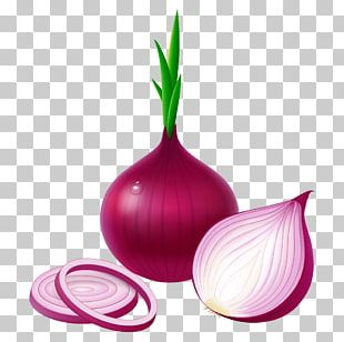Potato Onion Red Onion Vegetable Garlic White Onion PNG