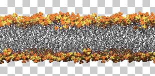 Cell Membrane Biological Membrane Bacteria University Of Queensland Simulation PNG