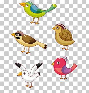Lovebird Parrot Owl Cartoon PNG