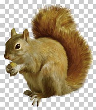 Tree Squirrels Rodent Chipmunk Pousada Bosque Do Esquilo PNG