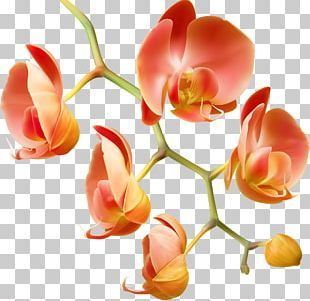 Orchids Flower Water Plant Garden Roses PNG