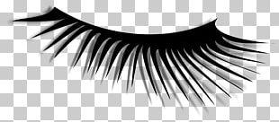 Eyelash Extensions Eyelash Curlers PNG
