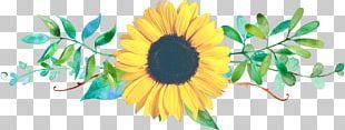 Common Sunflower Floral Design Cut Flowers PNG