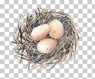 Bird Nest Bird Nest Egg Swallow PNG