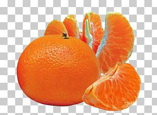 Cocktail Orange Juice Fruit Mandarina PNG