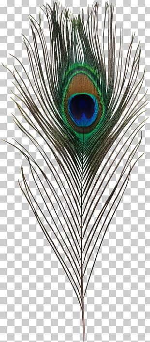 Bird Asiatic Peafowl Feather Simple Eye In Invertebrates PNG